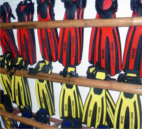 Tauchbasis - whaleshark divers